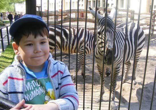 Zebrai zoologijos sode
