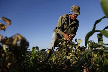 cuba-polemica-debate-agricultura-rural-desarrollo-campo-produccion