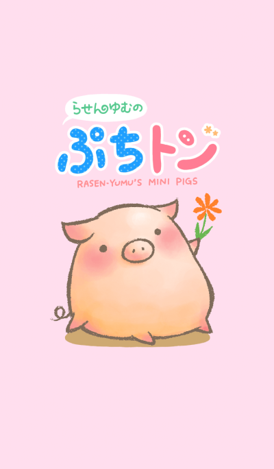 Rasen-Yumu's Mini Pigs