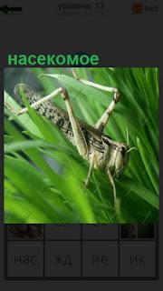 кузнечик как насекомое устроился на большом зеленом листе