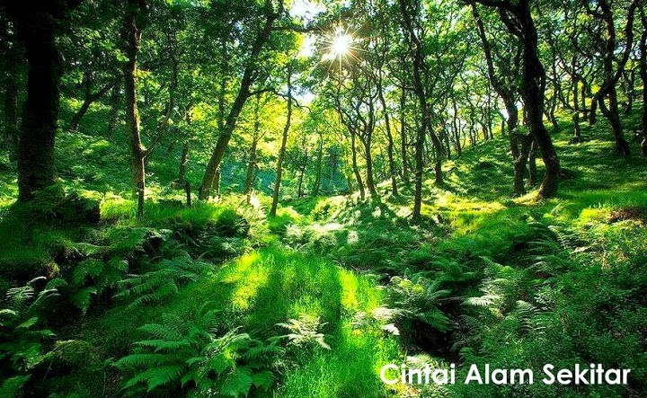 Cinta Kepada Alam Sekitar Dan Pencipta  AlamBlogr