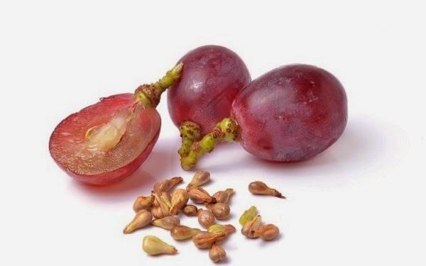 Obat Herbal Ekstrak Biji Anggur