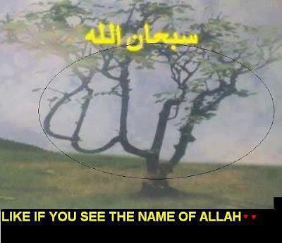 Pakistani Girls Wallpapers Download Allah Name On Tree Download Photos
