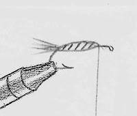 Line drawing of tying in the mallard flank feather divided wing and attaching the hackle of The Professor fly.