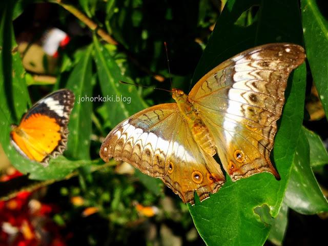 Entopia-Penang-Butterfly-Farm-Teluk-Bahang-Penang