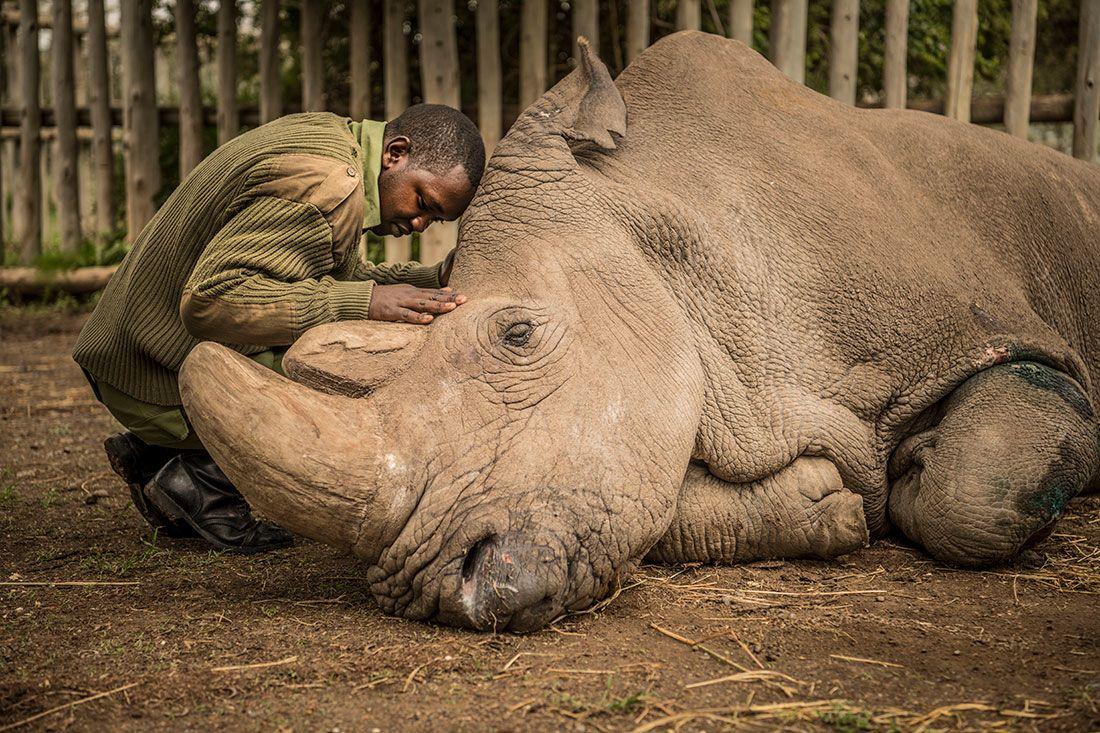 SUDAN Rhino