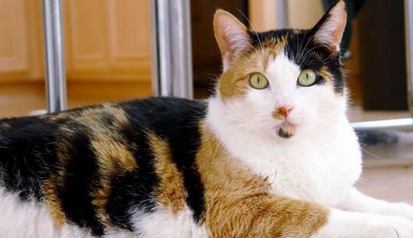 Kucing Belang 3