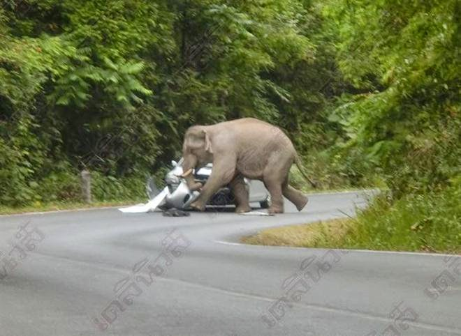 ช้างป่าบุกเหยียบรถทางขึ้นเขาใหญ่,ข่าวหวยเด็ด,ข่าวหวยดัง, หวยเด็ดงวดนี้,เลขเด็ดงวดนี้,รวมหวยซอง,หวยซองงวดนี้, 16/1/2558