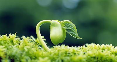 Pertumbuhan, Pengertian Pertumbuhan, Pengertian Pertumbuhan pada Tanaman, Definisi Pertumbuhan, Makna Pertumbuhan, Hakikat Pertumbuhan pada Tanaman.