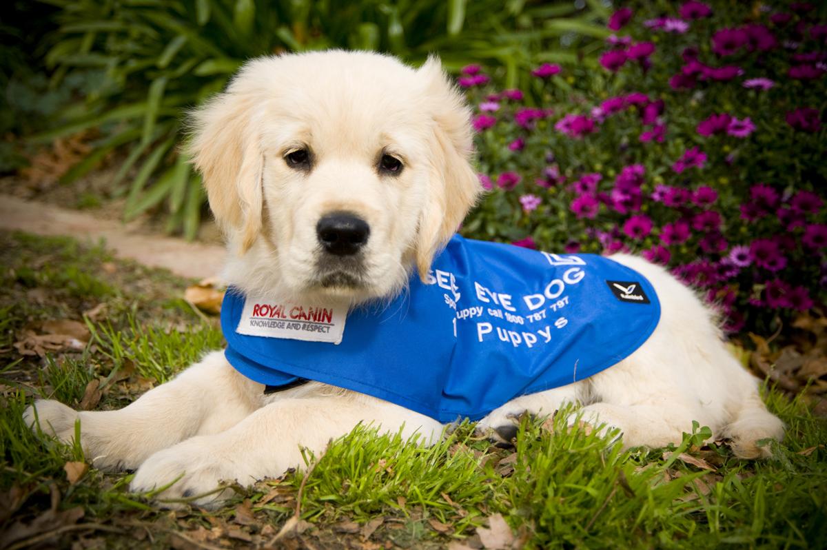 Seda Amp Royal Canin Celebrate 10 Year Partnership