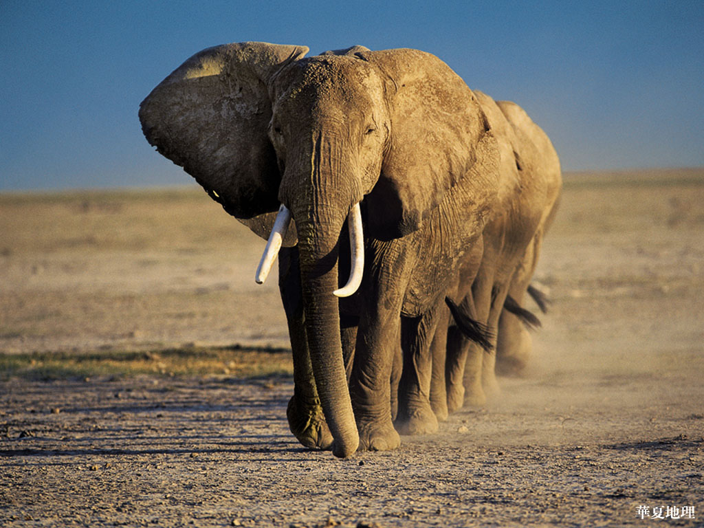 Cute Elephant Design Wallpaper Beautiful Pictures Of Elephant In Hd