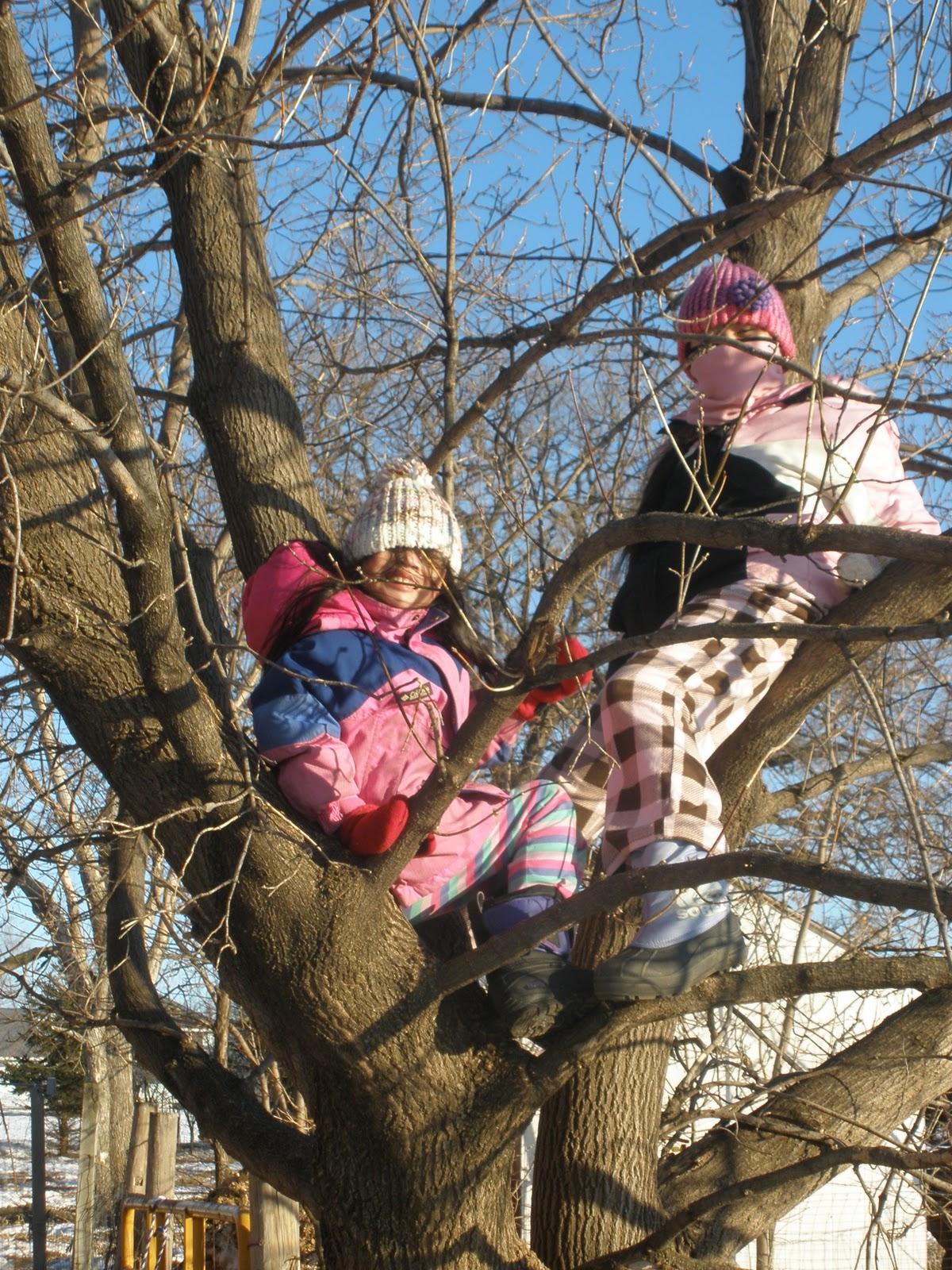 Girl Climbing Tree  Hot Girl Hd Wallpaper-9936