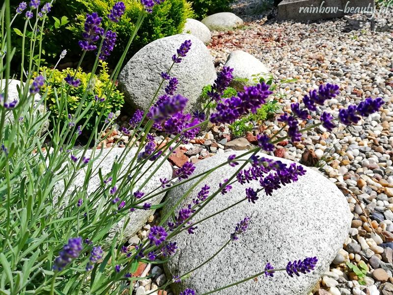 oczko-wodne-w-ogrodzie-inspiracje-skalniak