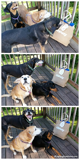 The Lapdogs think their friends at #Chewy are pawesome for sending their Mama a bag full of summertime fun! #ChewyInfluencer #Chewy #RescueDog #AdoptDontShop #HappyDogs ©LapdogCreations