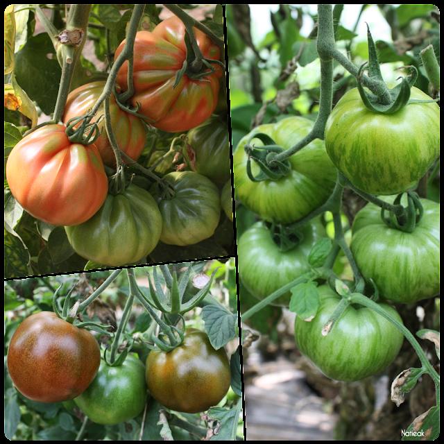 variétés de tomates  de  la ferme de Servigny