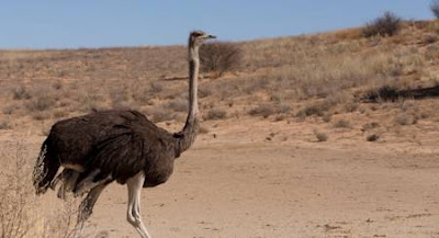 An Exhaustive List of the Animals within the Sahara Desert