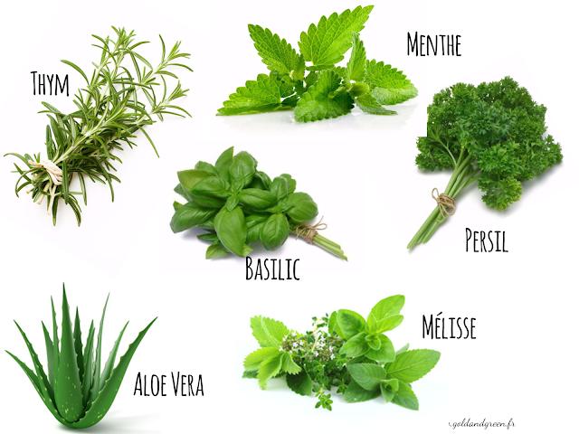 aromathérapie-indispensables-aromates