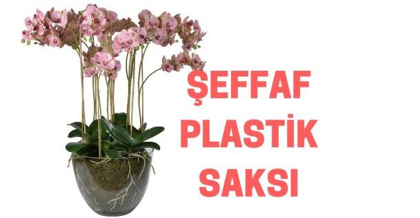 plastik orkide saksısı