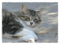 Historia de los gatos