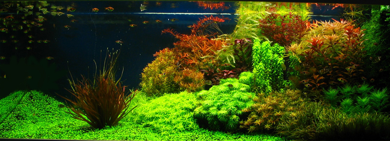 Doctor Fish: Aquascape trend this year