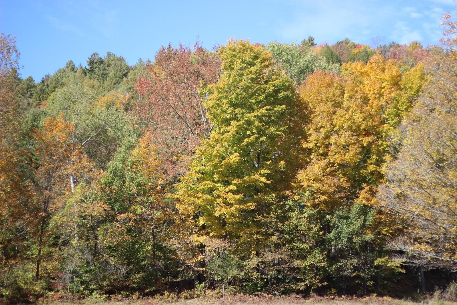 The Neapolitan, Vermont, Fall