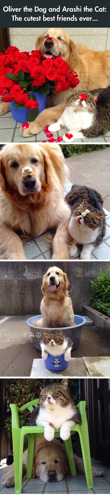 The Most Adorable Cute Dog Best Friends Ever