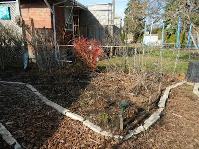 Etobicoke Toronto spring garden cleanup before by Paul Jung Gardening Services