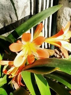 Una flor en mi balcón
