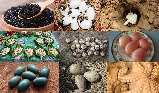 10 Olağanüstü Yenilebilir Yumurta
