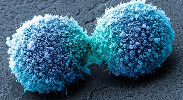 SCP-253 - Tế bào người