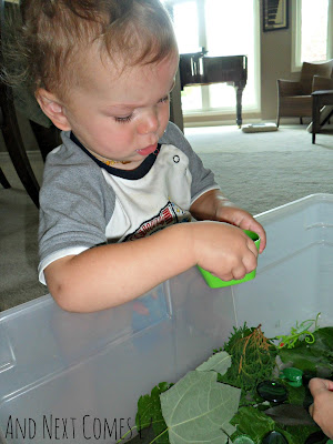 K checking out the green sensory bin from And Next Comes L