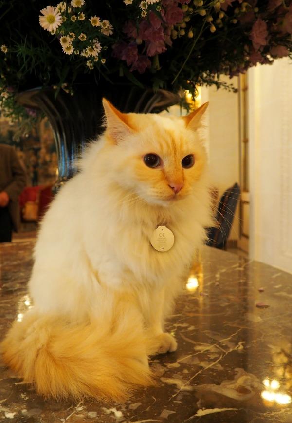 bristol hotel cat