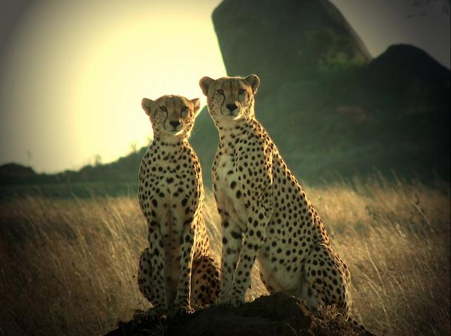 Ruaha National Park , Tanzania