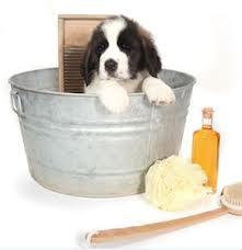 Bañando al perro