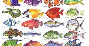 what genus do fish belong to