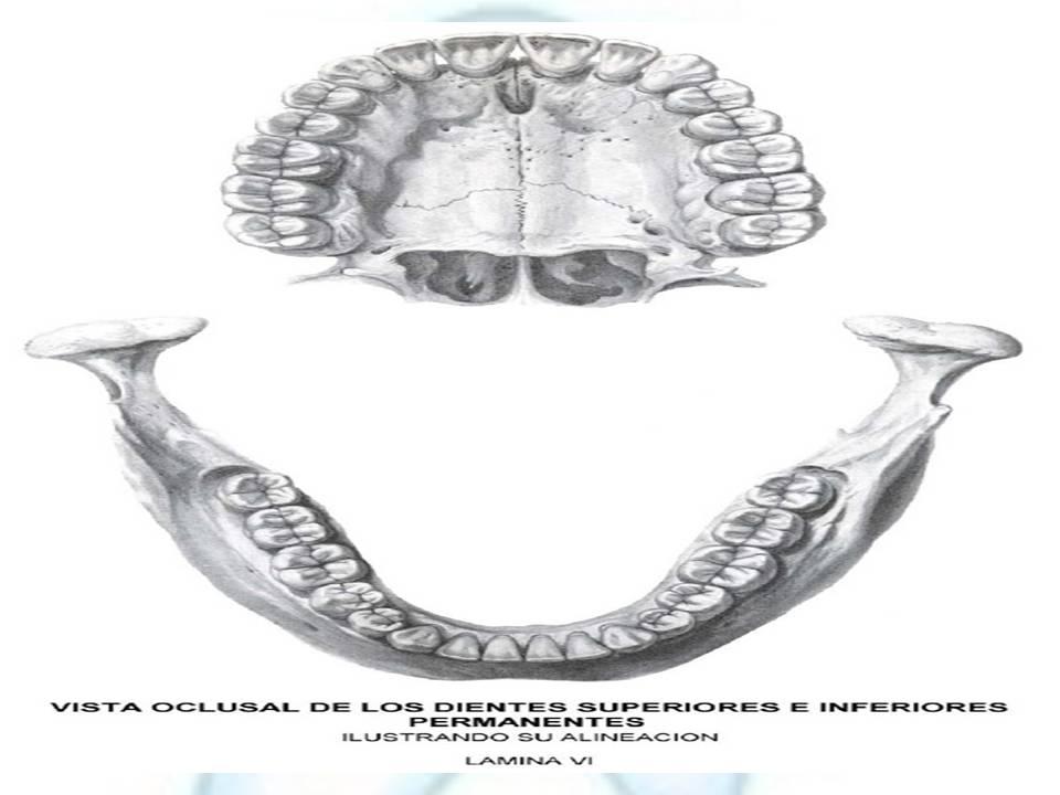 Prótesis Fija II: Molares Superiores e Inferiores