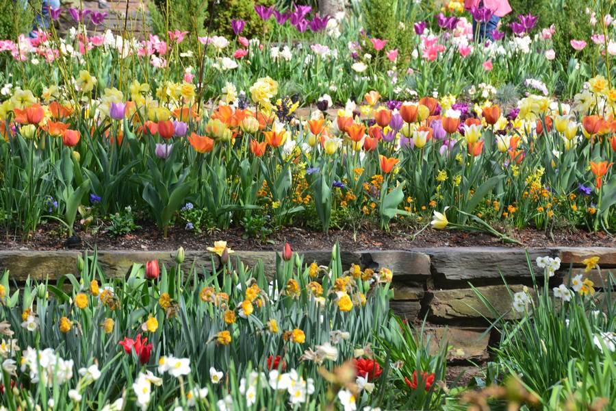 Les fleurs du jardins de Duke
