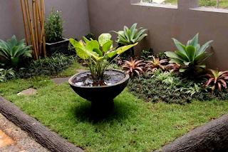 Tanaman untuk halaman rumah minimalis