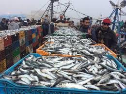 La CJUE exclue le Sahara des accords de pêche, le Maroc et l'UE répliquent