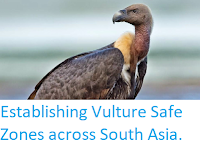 http://sciencythoughts.blogspot.co.uk/2014/12/establishing-vulture-safe-zones-across.html