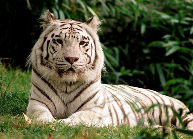 tại sao phải bảo vệ động vật hoang dã