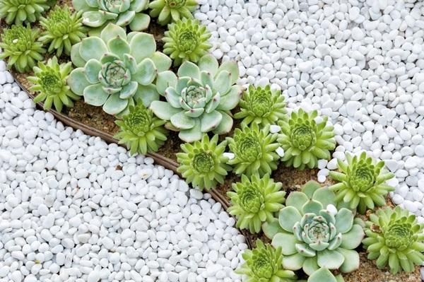El cuaderno de campo c mo hacer un jard n de cactus y for Plantas modernas para jardin