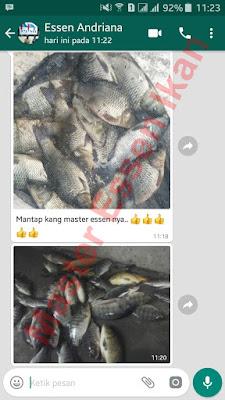 Essen Aroma Sereh Untuk Ikan Mas Harian