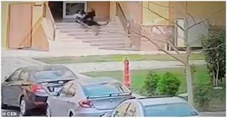 Γυναίκα έσωσε με αυτοθυσία μικρό αγόρι που δέχθηκε άyρια επίθεση από σκυλιά