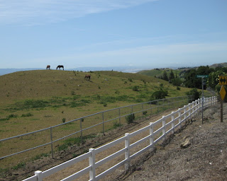 Horses grazing on a hilltop, San Francisco Bay in the distance