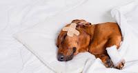 MEDICINA-VETERINARIA-animais-doentes-vetarq