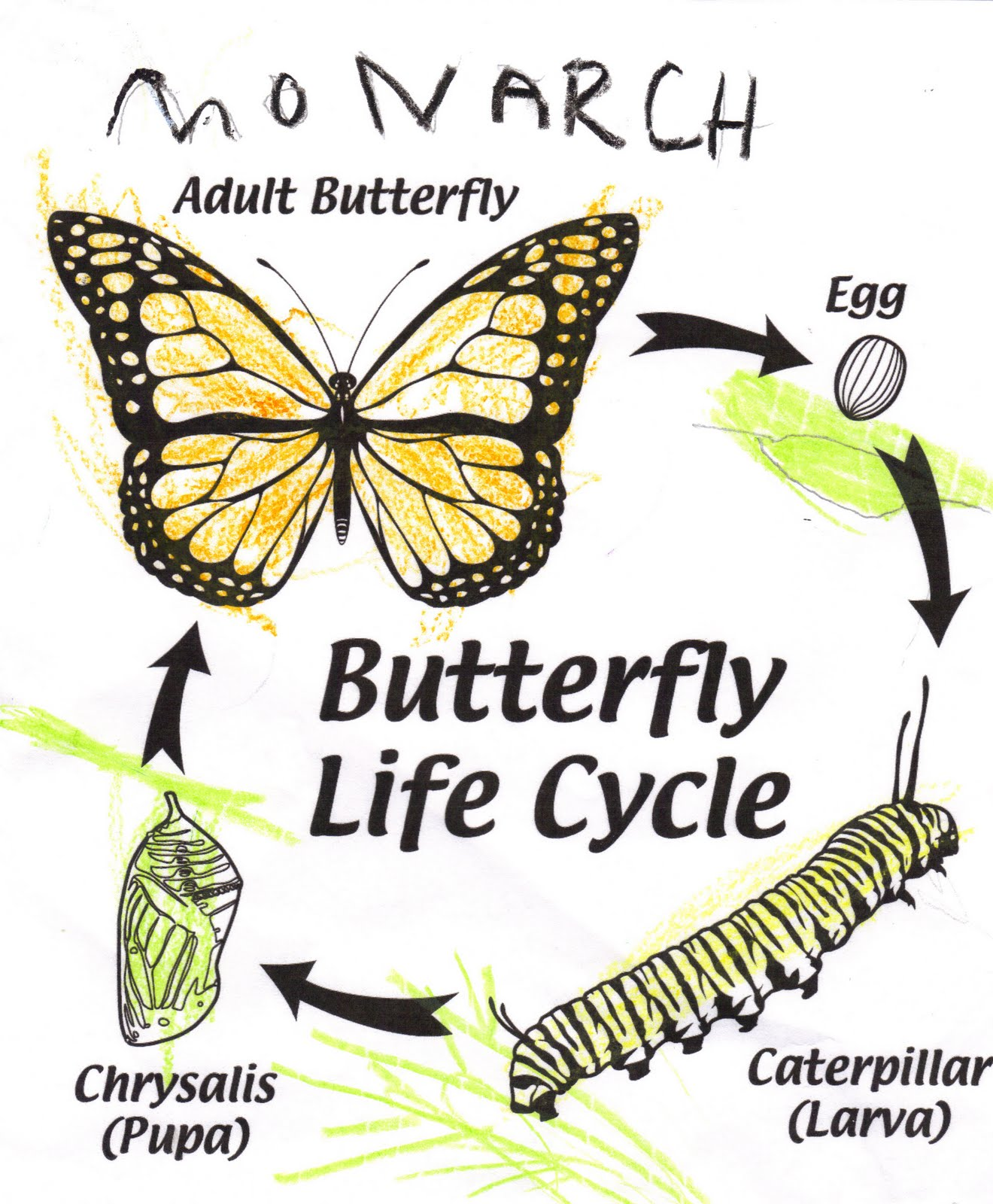 Caterpillar Book Of The Day