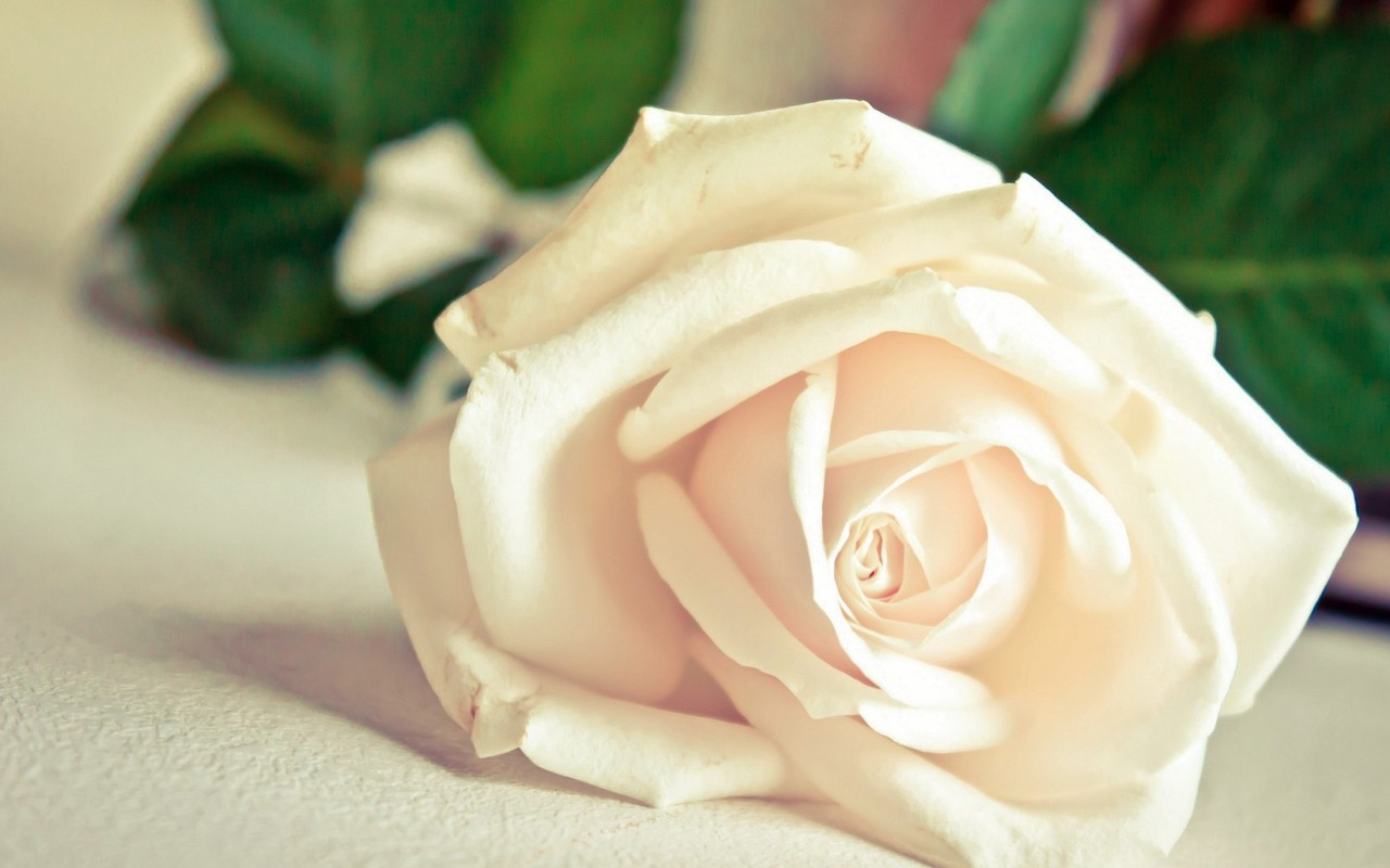 http://2.bp.blogspot.com/-nPtnMFsinBM/UQ4utJ8fJWI/AAAAAAAACrI/TKSHB5Z_eFA/s1600/HD+Flower+Wallpapers+For+Mobile.jpg