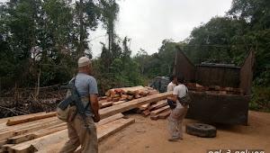 Tim Gabungan Tangkap  Pemodal Ilegal Loging Lintas Provinsi