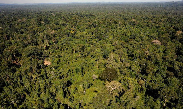 Study finds Amazonian rainforests gave birth to the world's most diverse tropical region